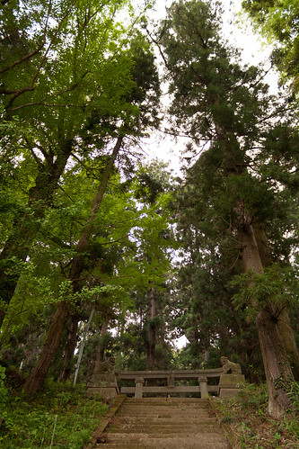 #57 Giant Cryptomeria of Onsen Shrine | by Mullenkedheim