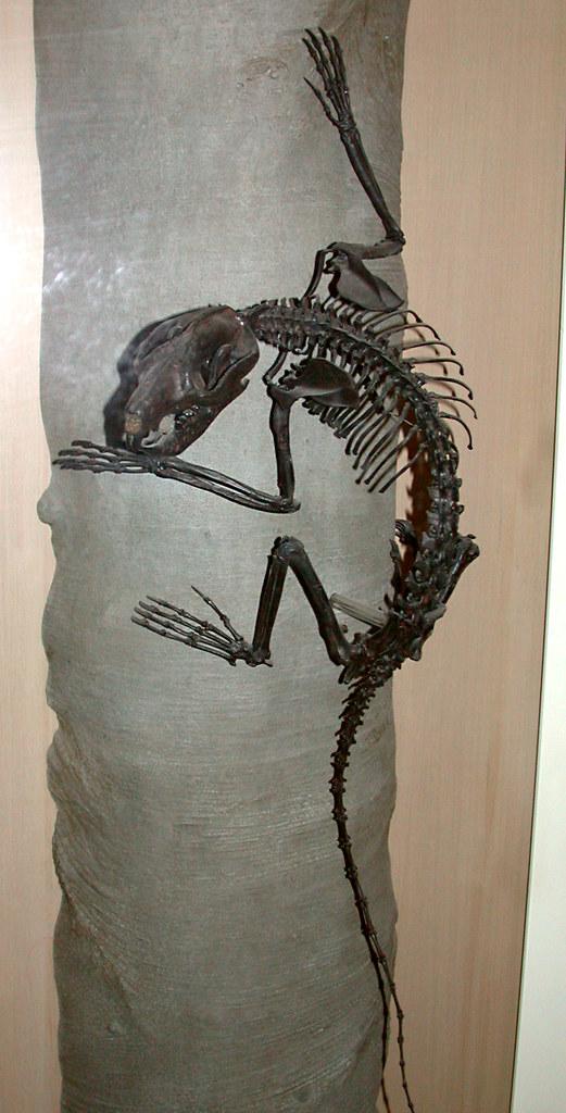 Museum Of Natural History Manhattan New York