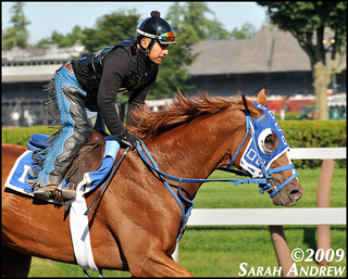 Summer Bird: 2009 Belmont Stakes Winner | by Rock and Racehorses
