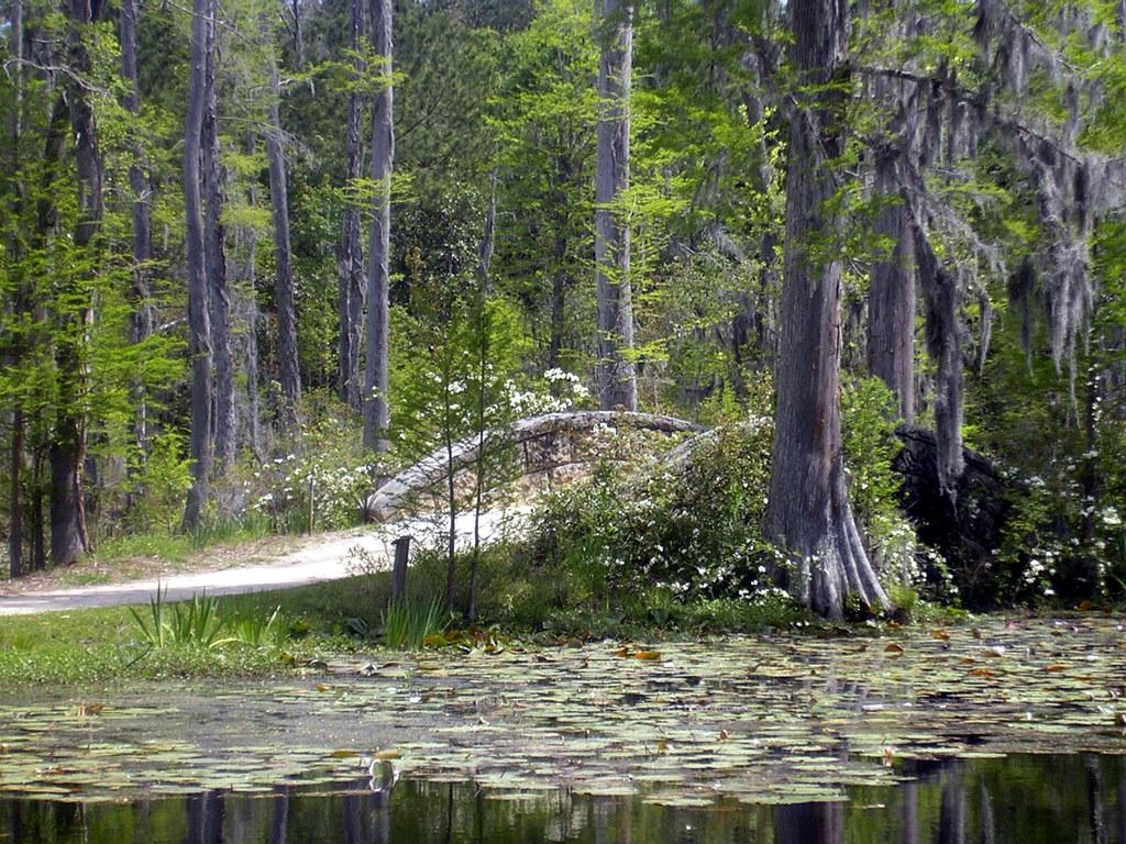 Brooks The Swamp Db Florida Gators  Ring