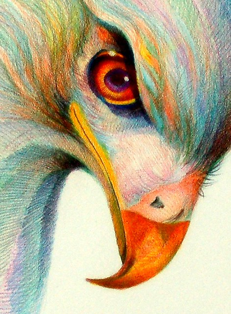 raptor eye 2 | two-decade colored pencil on vellum paper ... - photo#34