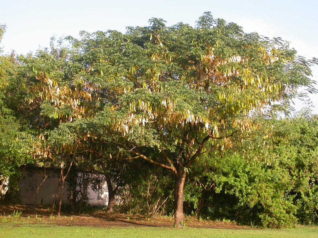 3878704826 on Tree Map