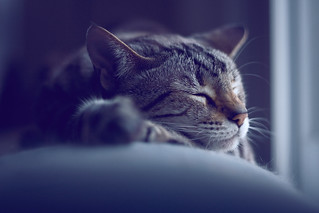 Sleeping Cat | by carianoff