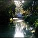 Arboretum Morning