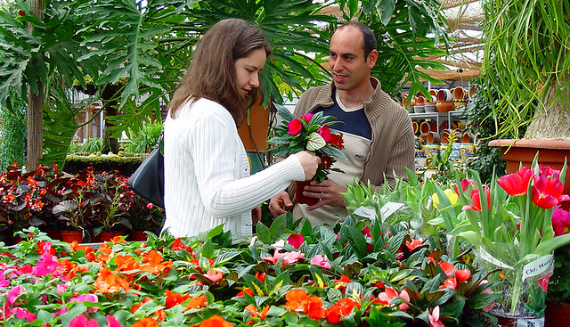 Plantas ornamentales de interior de flor viveros alegre for Concepto de plantas ornamentales