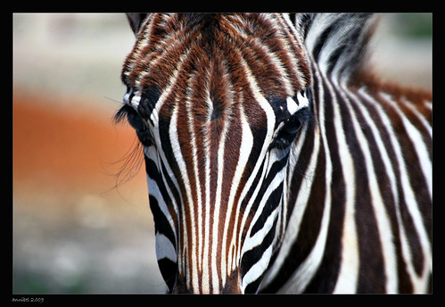 Perhaps, too many stripes... | by annibel