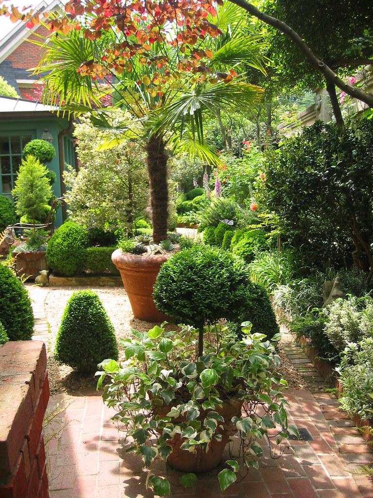 Fan palm in courtyard garden   Potted Chinese fan palms do ...