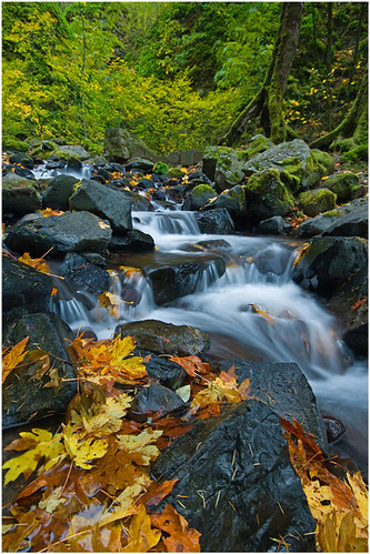 STARVATIONCREEK FALL | by Cliff Zener