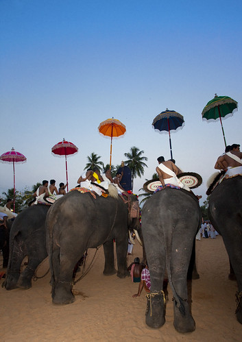 Row Of Decorated Elephants Ridden By Priests Holding Colorful Parasol During Jagannath Temple Festival, Thalassery, India | by Eric Lafforgue