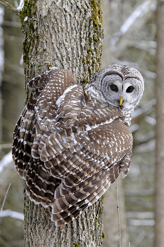 how to get owl permit canada