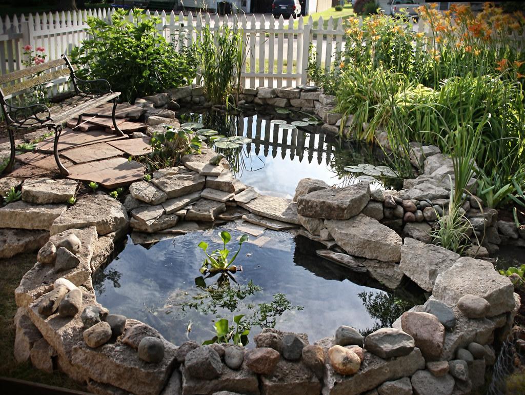 New koi pond my dad and i put a new koi pond their for My koi pond