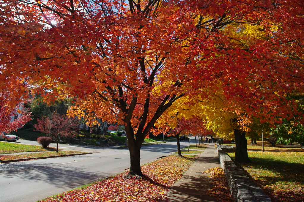Autumn at iu autumn colors on 3rd street on the indiana for Immagini autunno hd