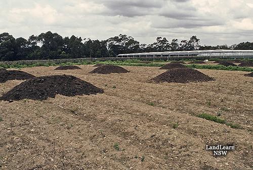 Cut flower soil preparation ornamental cut flowers for Preparation of soil