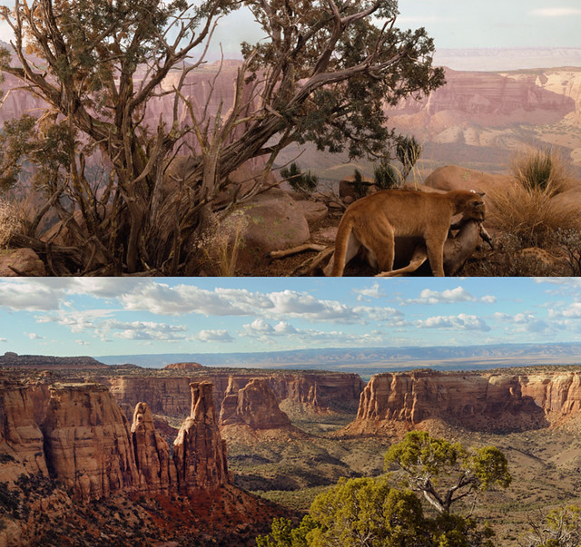 Denver Museum Of Nature Science: Mountain Lion Diorama (top) Edge