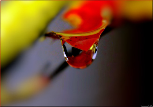 red drop.......... | by Hausstaubmilbe ( slow)