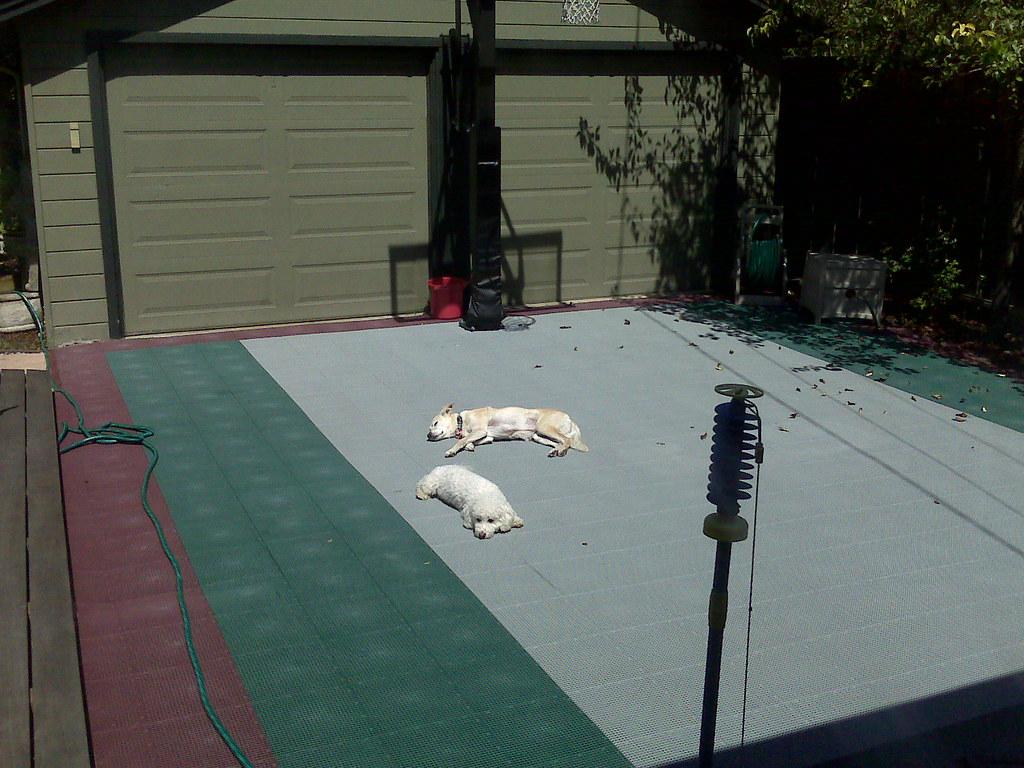 The dogs love the driveway basketball court   ben saitz ...