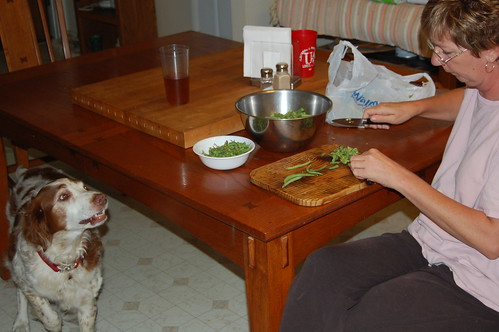 Is Green Beans Good For Dogs