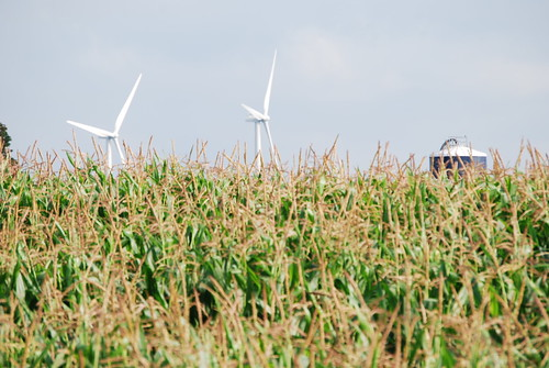 NY Birds Bats and Wind, Maple Ridge Wind Farm Photo by David Chanatry | by WNPR - Connecticut Public Radio