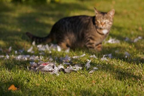 Cat Guard Cat Guarding Her Food 2
