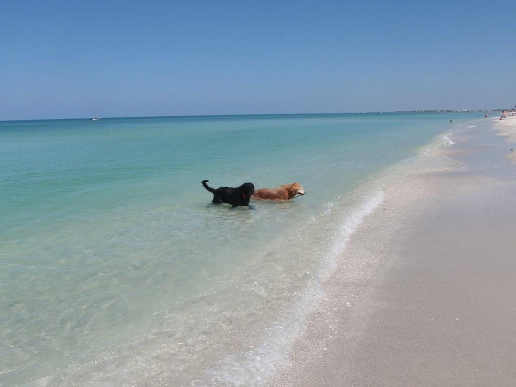 Dog Beach Destin Fl