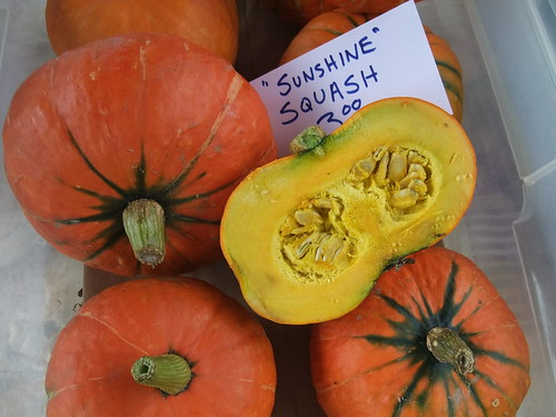 Sunshine Squash | by swampkitty