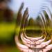Wine Lenses