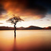 """That Tree"" at Milarrochy, Loch Lomond - a wider view"