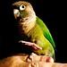 Lupe Bird