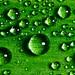Water Drops ~ Explored ~