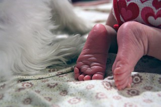 baby feet and doggy paws | by The Spohrs Are Multiplying...