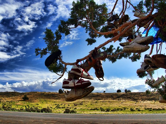 Tree Shoes Nevada Shoe Tree on us 395 | by