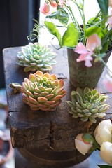 succulents by scott w. baker | by Sarah Ryhanen