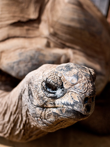 Giant tortoise | by Richard Holden