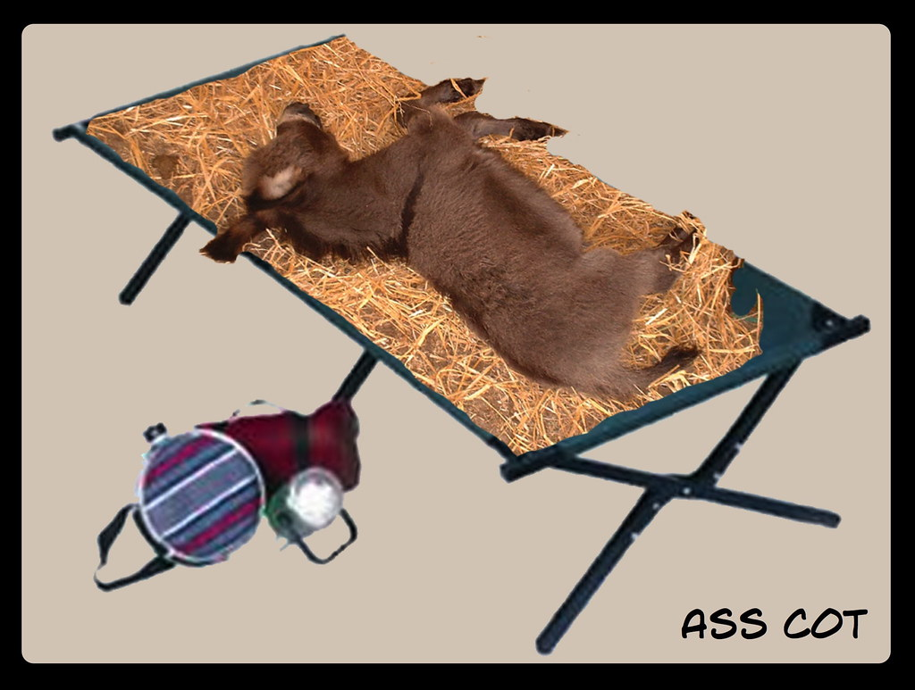 Image result for ass cot