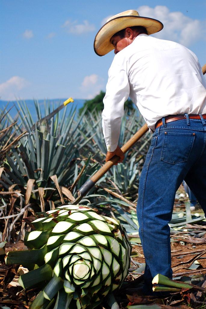 Bildresultat för tequila
