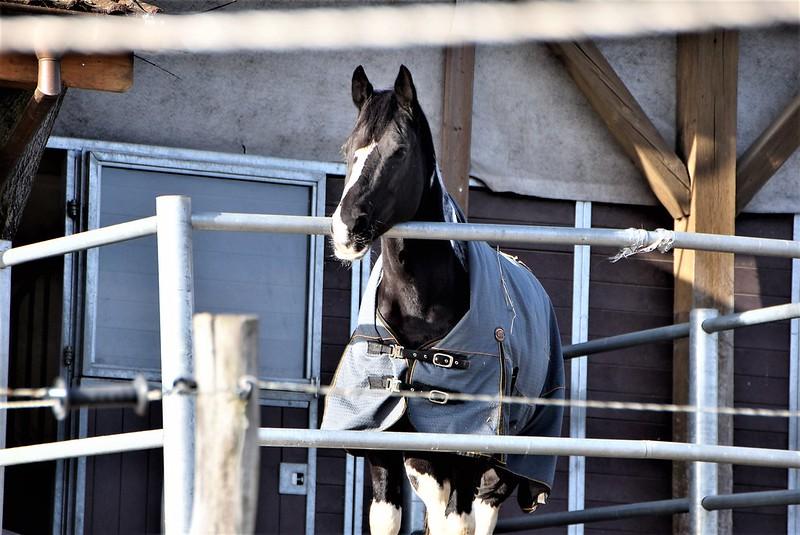 Horses 12.02 (1)