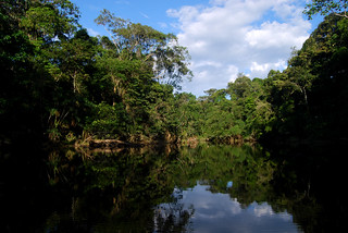Oxbow lake, Yasuni | by ggallice