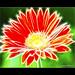 Majestic Flower [EXPLORED]