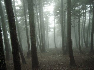 "Fog ""covers"" ... the forest !! 