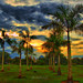 Palm @ Sunset