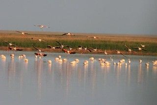 Flamingos, Kazakhstan | by UNDP in Europe and Central Asia