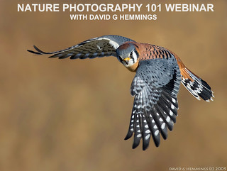 Webinar HP 1 | by Nature's Photo Adventures - David G Hemmings