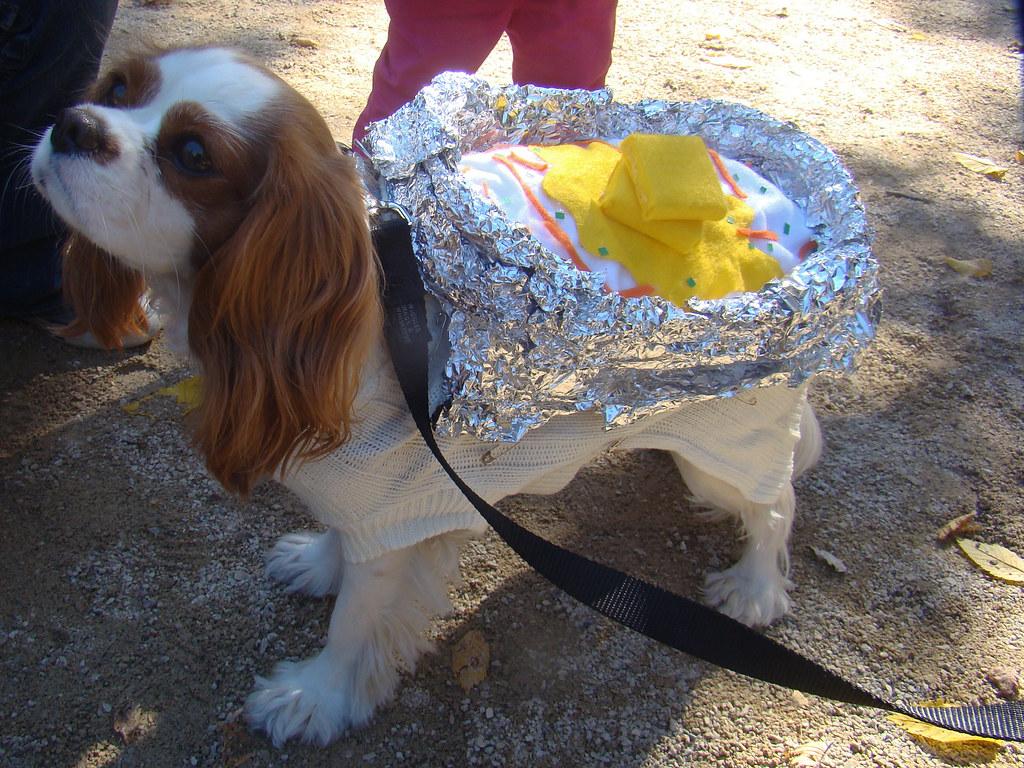 Puppy Dog Pals Halloween Costume