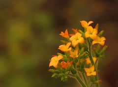 Flower bunch | by naveen choudhary