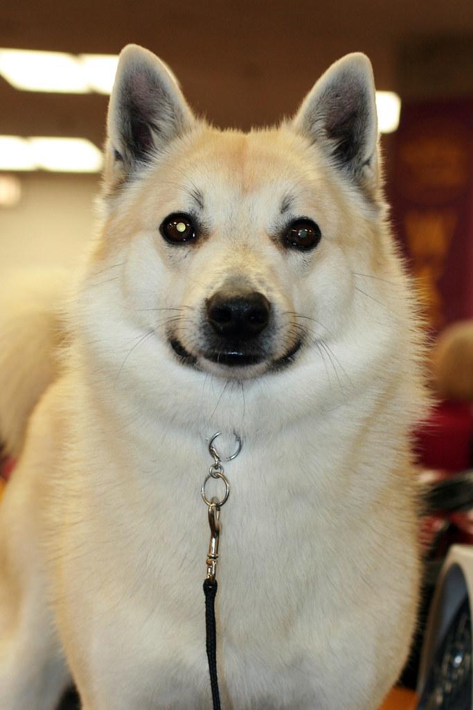 Trained Gaurd Dog Vs Not Trained Gaurd Dog