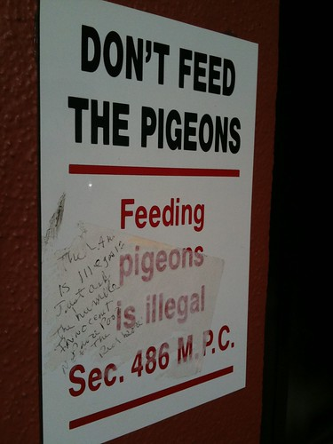 """Feeding pigeons is illegal"""
