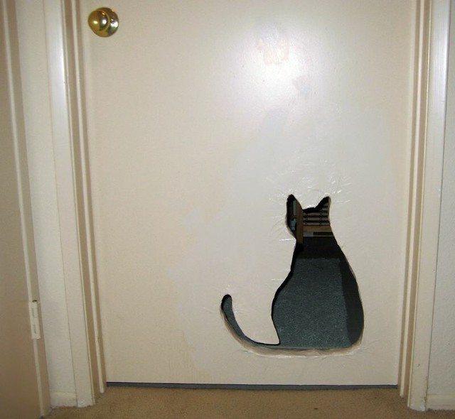 Cat S Room Vr