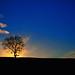 Lonely tree [explored]