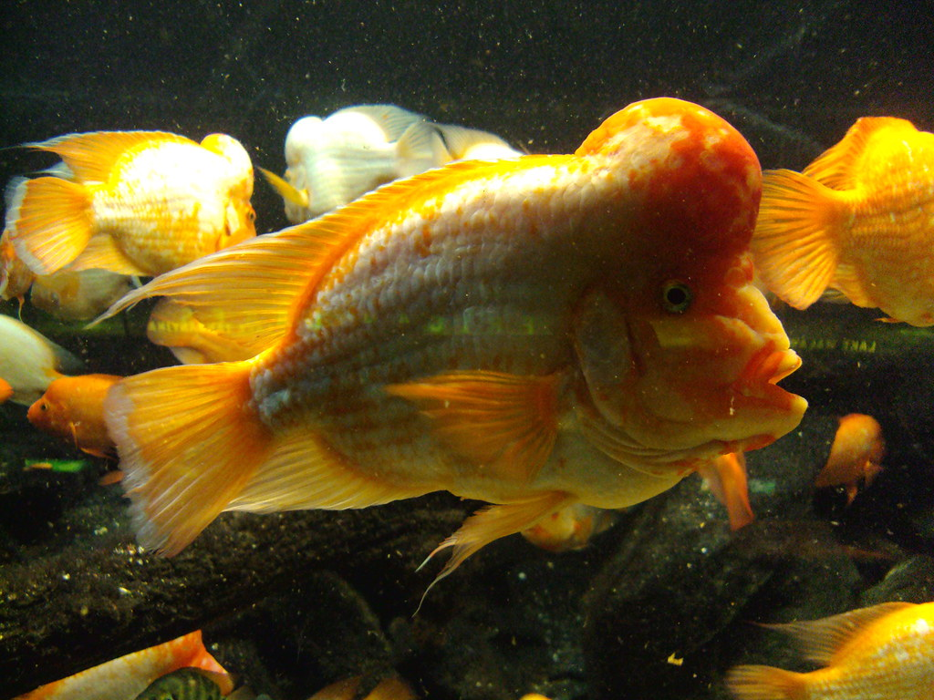 Brain Tumor Fish | laura l | Flickr