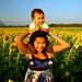 Sunflowers Lopburi Thailand 112808 09